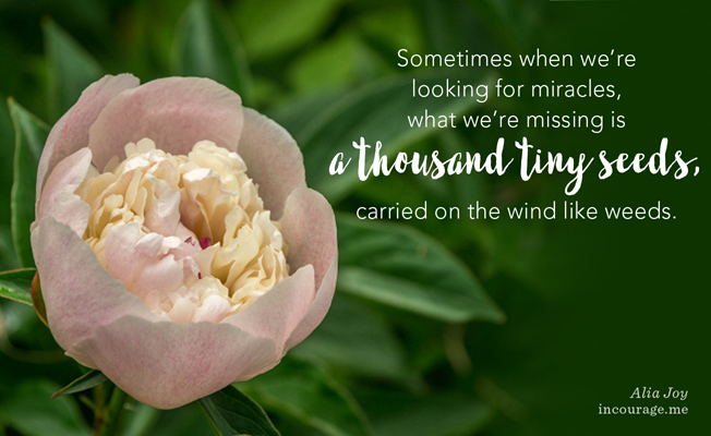 We Have Much to Learn From the Flowers: An Incourage Post